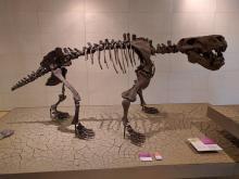 Il fossile di un tetrapode, antenato dei dinosauri.
