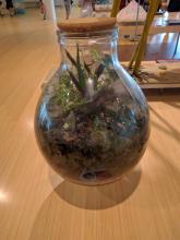 Un ecosistema in bottiglia.